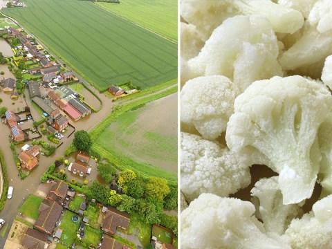 Britain facing cauliflower shortage due to extreme weather