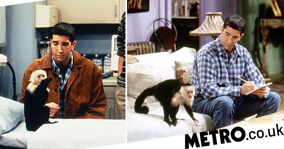 Friends' Marcel the monkey is making a TV comeback after ...