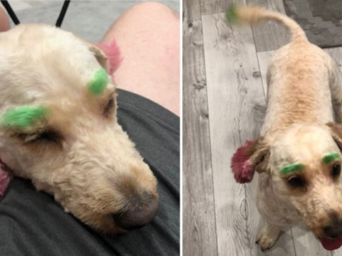 Woman calls out groomers for dyeing her dog's eyebrows green