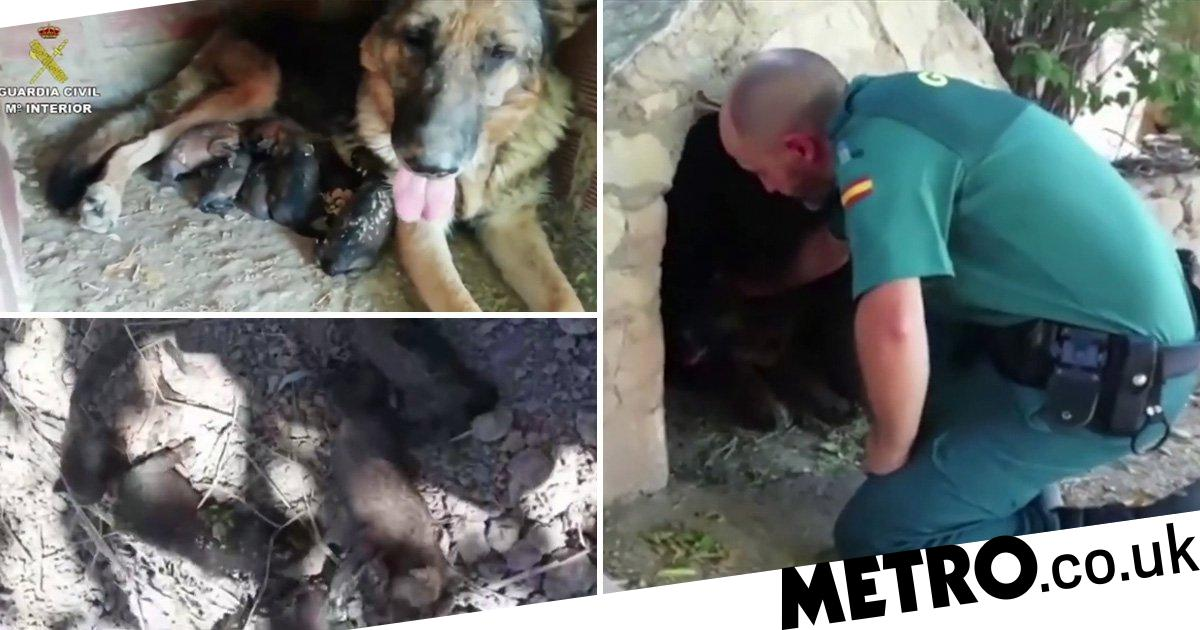 Moment police rescue puppies that had been buried alive