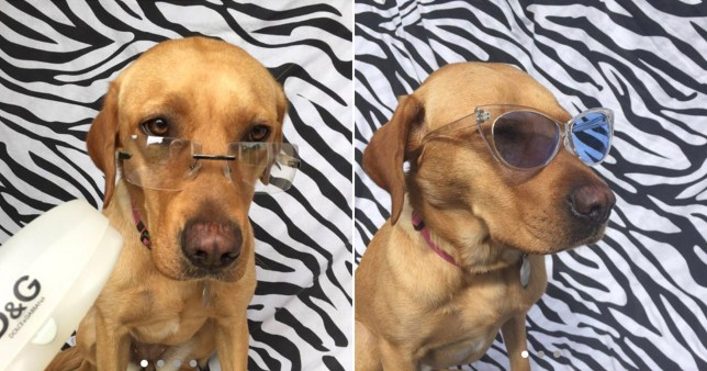 Woman selling glasses on Depop models them on her dog