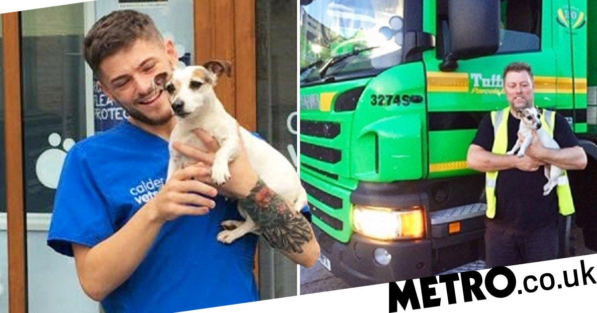Missing dog reunited with owner after escaping to busy motorway