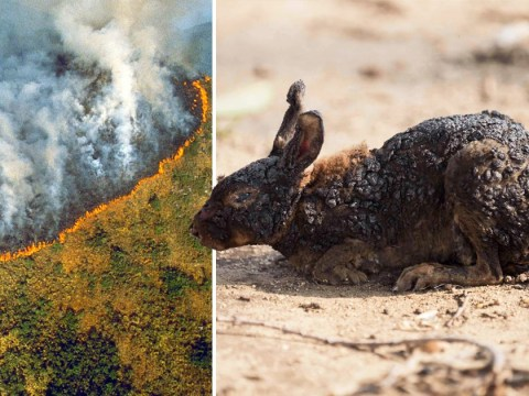 Some of the most shared Amazon forest fire images are old