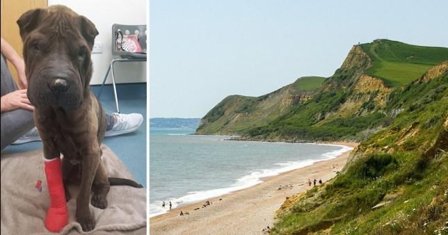 Dorset cliffs