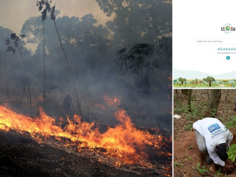 People flock to search engine that plants trees after Amazon rainforest fires