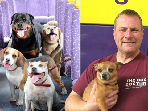 Dogs get special bus route so they can go sightseeing