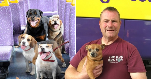 Kent-based transport company Go-Coach have launched the UK's first bus route for dogs