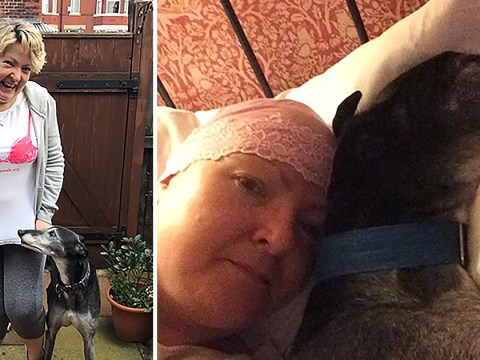 Jimmy the greyhound saved his owner's life after sniffing out a cancerous tumour in her breast