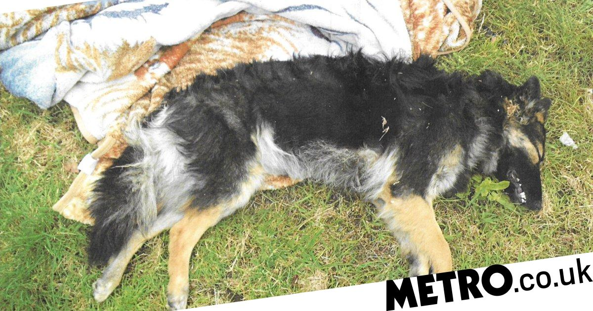 Puppy beaten to death and dumped in trees by 'angry' owner
