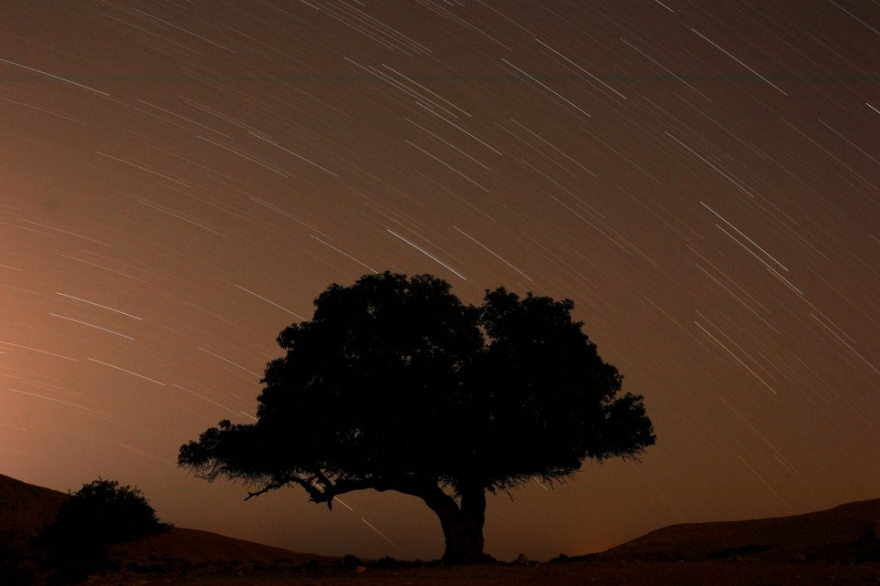 A long exposure shows stars behind a tree during the annual Perseid meteor shower near the town of Mitzpe Ramon, southern Israel, August 13, 2019. REUTERS/Amir Cohen