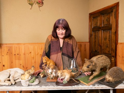 Teacher's home raided after police spot taxidermy in pictures on Zoopla