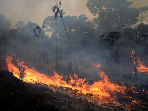 Amazon still burning as Brazil refuses £18,000,000 G7 aid to fight wildfires
