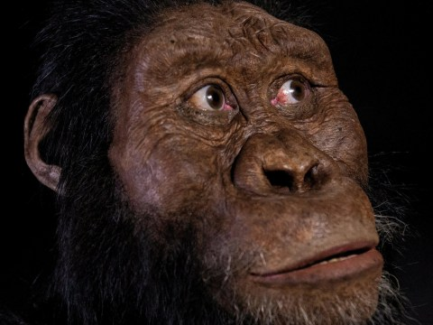This is what our oldest known ancestor looked like