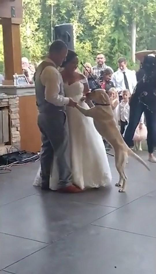 Nicole and Seth Funden dance at their wedding with their golden Labrador Eva