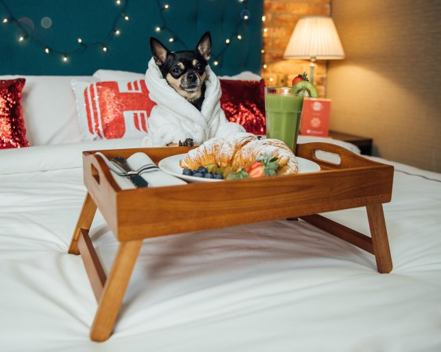 A dog with a tray of food on a hotel bed