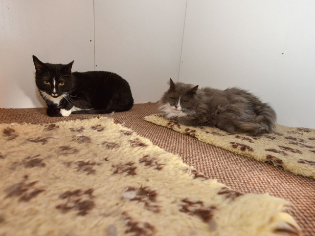 posh and kiki pair of cats who have been rejected for two years