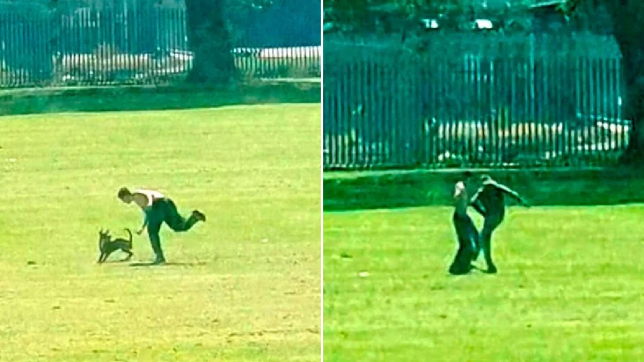 The Scottish SPCA are hunting a man who was caught on video kicking his dog in a park in Falkirk