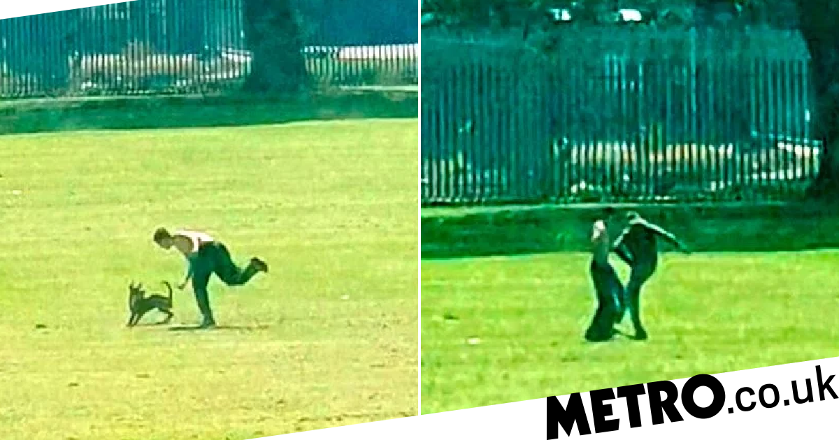 Hunt to find thug in video who kicked dog in park