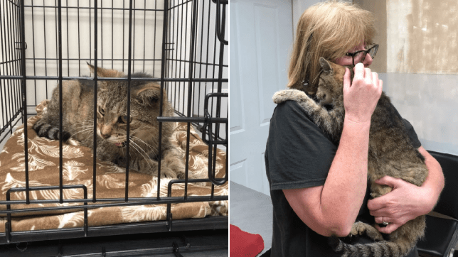 Tiger the cat is pictured after being rescued, and being reunited with owner Maggie 11 years after he vanished