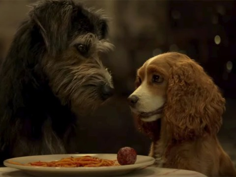 Disney's Lady And The Tramp live-action remake first trailer brings dog love story to life