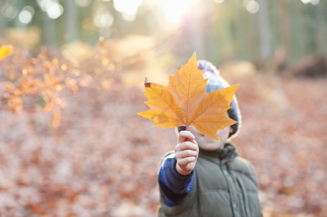 Young boy hiding behind a leaf in Autumnal woodland