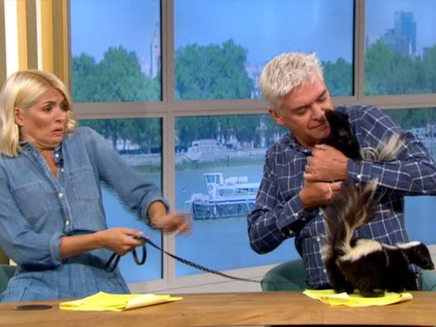 Holly Willoughby completely freaks out and flees Phillip Schofield as skunk takes aim 'ready to fire'