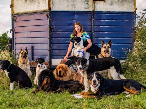 Meet The Travelling Menagerie: Two people, nine dogs and five cats exploring Europe in a caravan