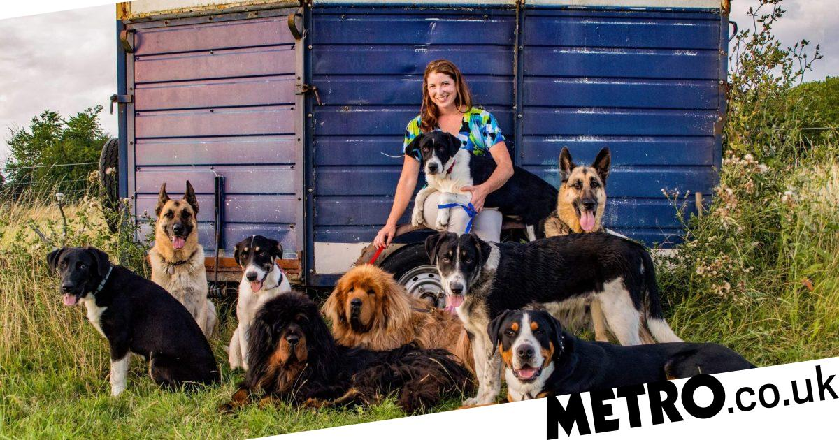 Meet the Travelling Menagerie: two people and 14 pets touring Europe