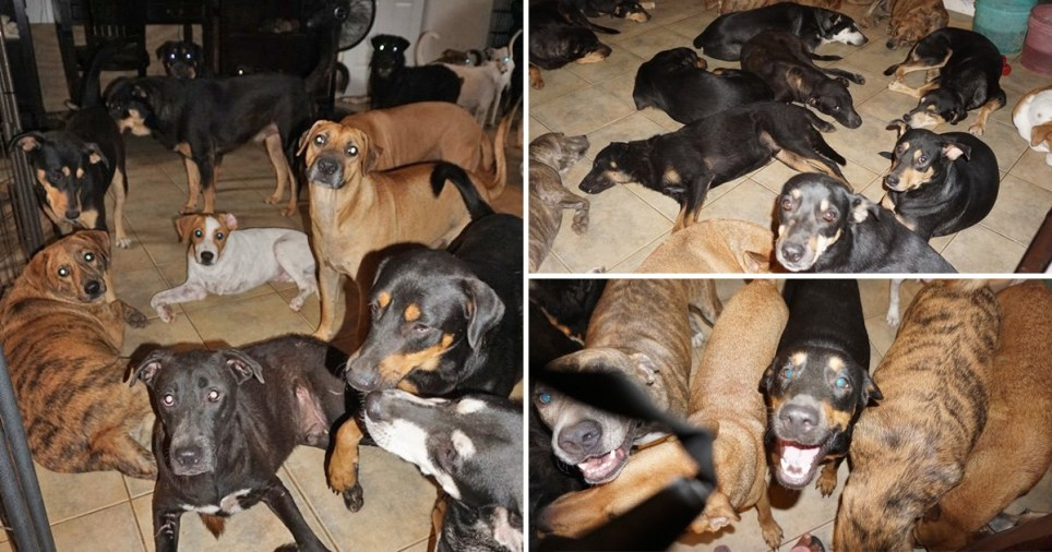 Woman in the Bahamas shelters 97 dogs inside her home to protect them from Hurricane Dorian