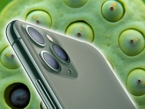 Here's why the new iPhone is triggering people who suffer from a fear of small holes