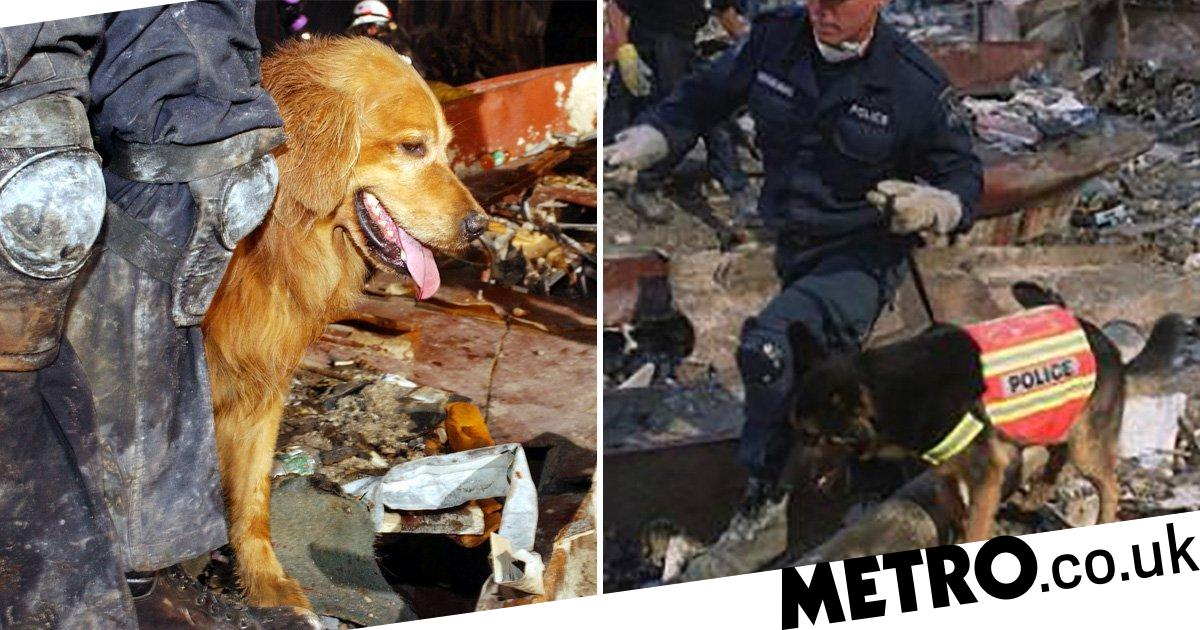 Remembering the incredible story of hero dogs on 9/11