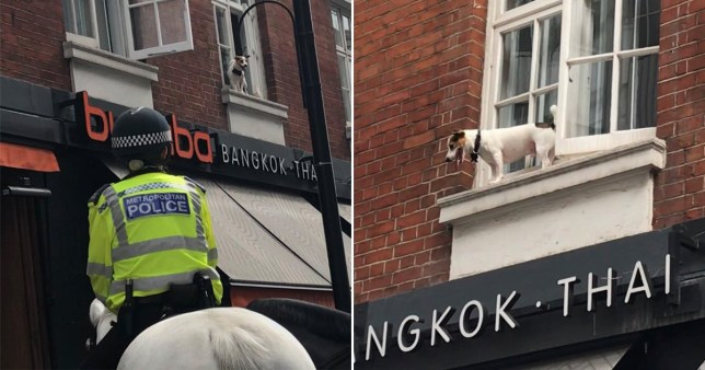 The pup was stuck on a narrow ledge above Thai restaurant Busaba (Picture: Twitter/ZoraSuleman)