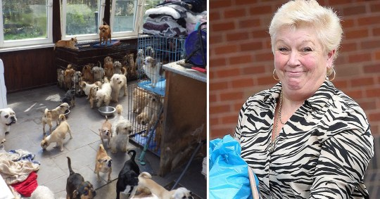 Dogs and Lynn Stoker, 62,