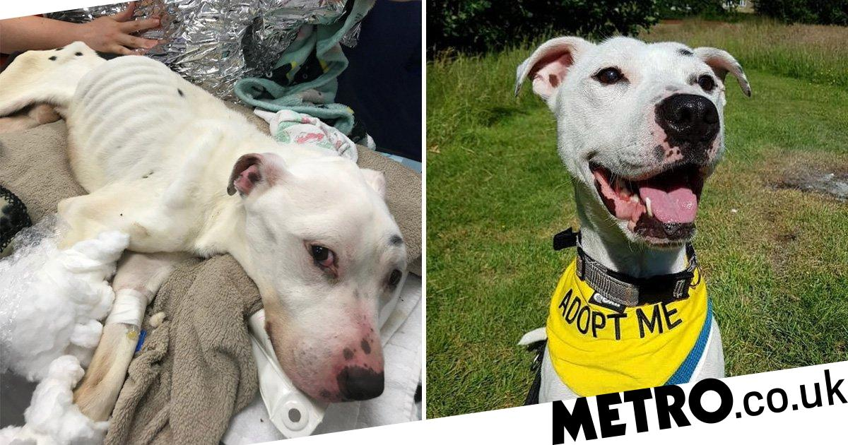 'Thinnest dog ever seen alive' ate glass and batteries because he was so hungry