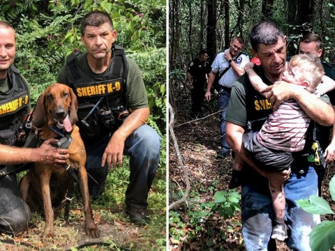 Missing autistic toddler rescued by police bloodhounds