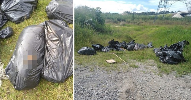 Bin bags filled with human remains found by passers-by in Mexico