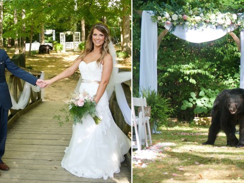 Black bear photobombs couple's wedding pictures