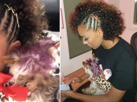 Mel B shows off her dog's purple hairdo after reassuring fans it's 'harmless' vegan organic dye