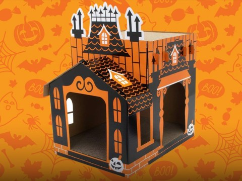 These mini haunted houses are the perfect Halloween treat for cats who love being spooky