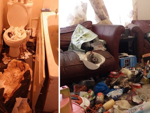 Inside filthy house where starving cats resorted to cannibalism