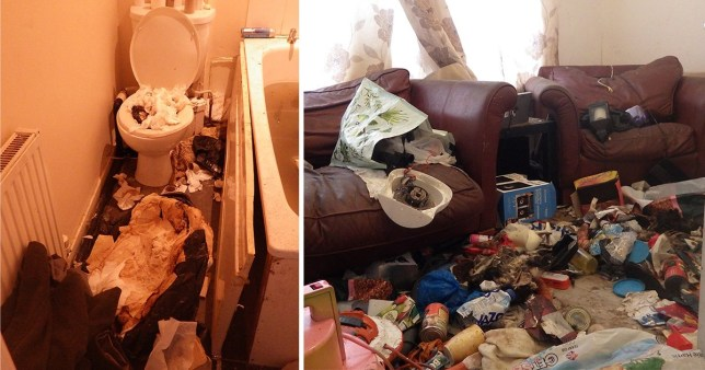 Filthy home with decomposing cats