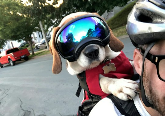 Frankie in his doggles