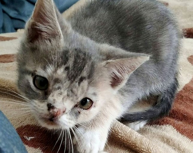 A woman saved a cat with Downs Syndrome from being put down after discovering the kitten wandering around in the street