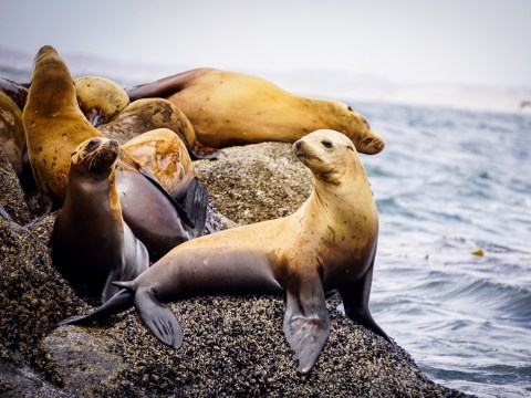 New marine heatwave could kill sea lions and whales
