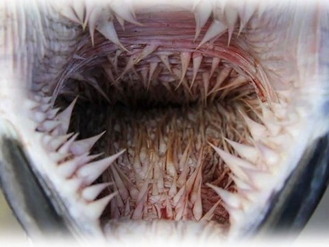 Sea turtles have terrifying spikes in their mouths which make it hard to spit out plastic
