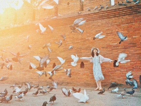Meet the 'pigeon spookers' helping tourists achieve the perfect Instagram shot