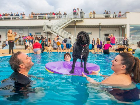 Swimming pool allows dogs so pets can splash around with their owners