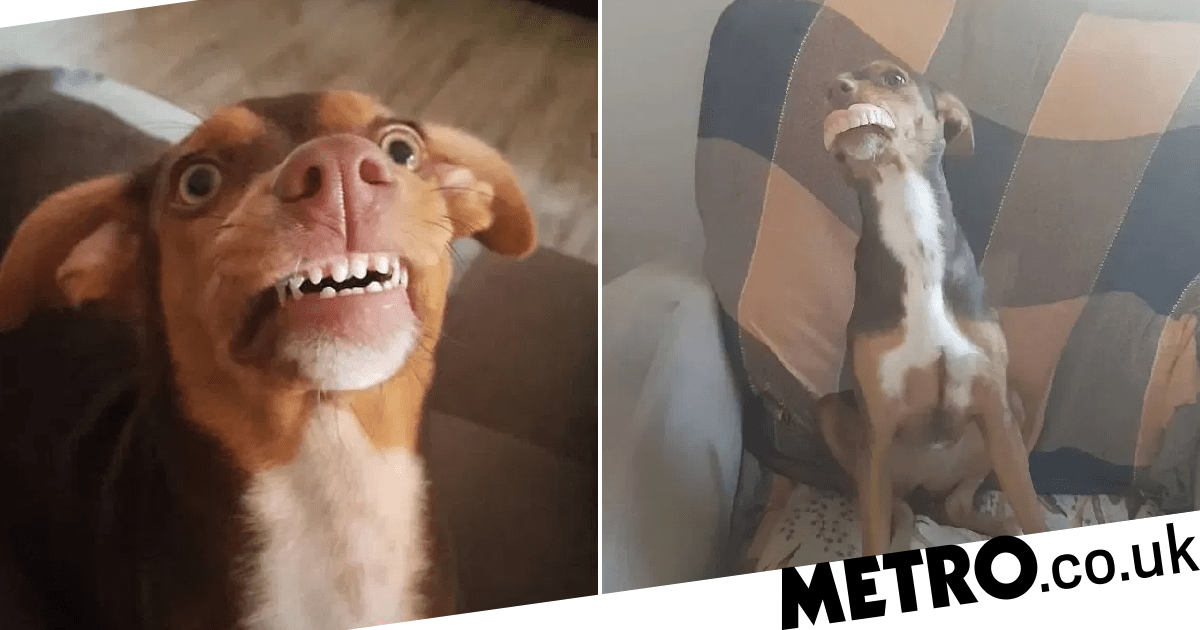 Grandma loses her false teeth, finds out the dog is wearing them