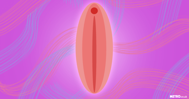 Illustration of a labia on a dark pink and purple background