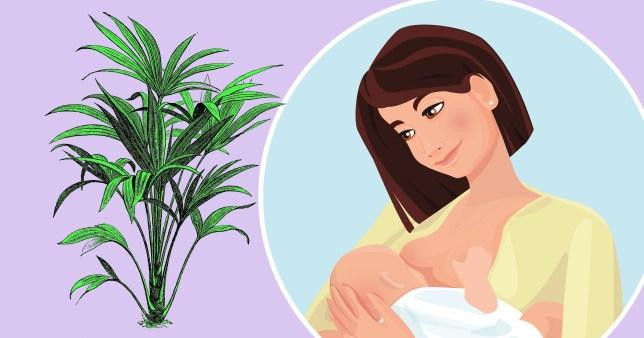 scientists have engineered plants to make 'breast milk'